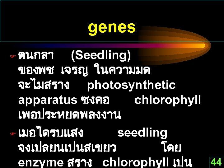 genes ตนกลา (Seedling) ของพช เจรญ ในความมด จะไมสราง photosynthetic apparatus ซงคอ chlorophyll เพอประหยดพลงงาน F เมอไดรบแสง