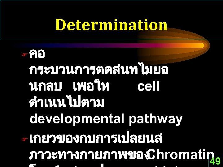 Determination คอ กระบวนการตดสนทไมยอ นกลบ เพอให cell ดำเนนไปตาม developmental pathway F เกยวของกบการเปลยนส ภาวะทางกายภาพของ Chromatin 49