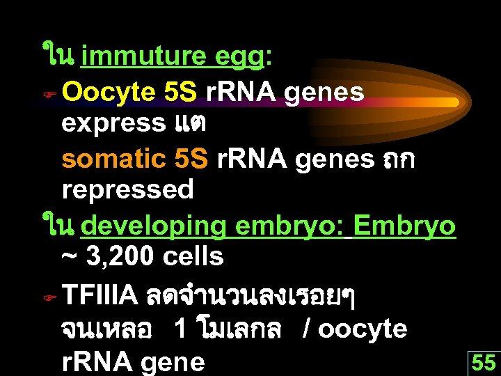 ใน immuture egg: F Oocyte 5 S r. RNA genes express แต somatic 5