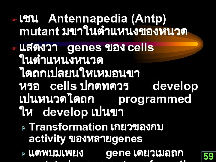 เชน Antennapedia (Antp) mutant มขาในตำแหนงของหนวด F แสดงวา genes ของ cells ในตำแหนงหนวด ไดถกเปลยนใหเหมอนขา หรอ cells