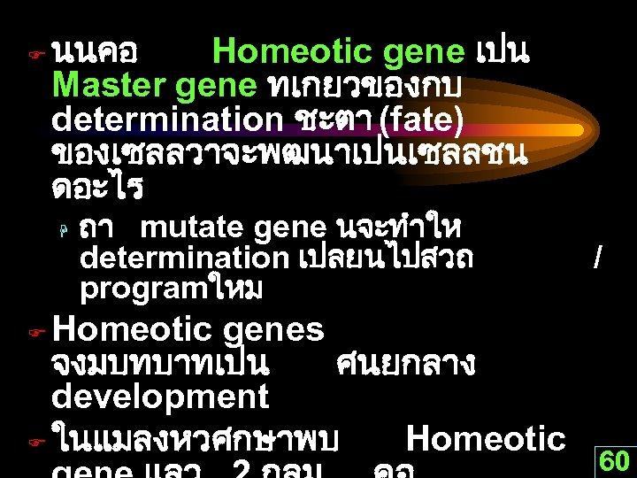 F นนคอ Homeotic gene เปน Master gene ทเกยวของกบ determination ชะตา (fate) ของเซลลวาจะพฒนาเปนเซลลชน ดอะไร H