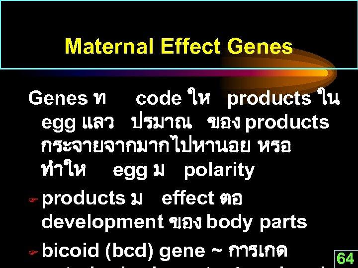 Maternal Effect Genes ท code ให products ใน egg แลว ปรมาณ ของ products กระจายจากมากไปหานอย