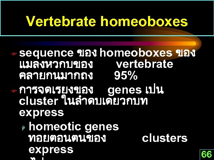 Vertebrate homeoboxes sequence ของ homeoboxes ของ แมลงหวกบของ vertebrate คลายกนมากถง 95% F การจดเรยงของ genes เปน