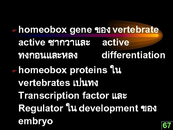 F F homeobox gene ของ vertebrate active ชากวาและ active ทงกอนและหลง differentiation homeobox proteins ใน