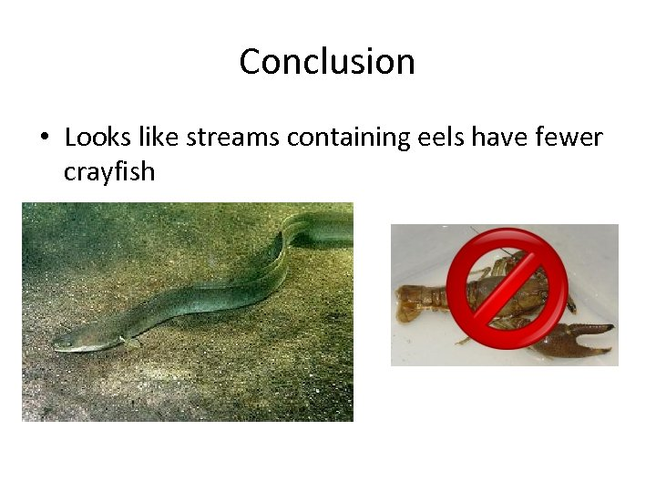 Conclusion • Looks like streams containing eels have fewer crayfish
