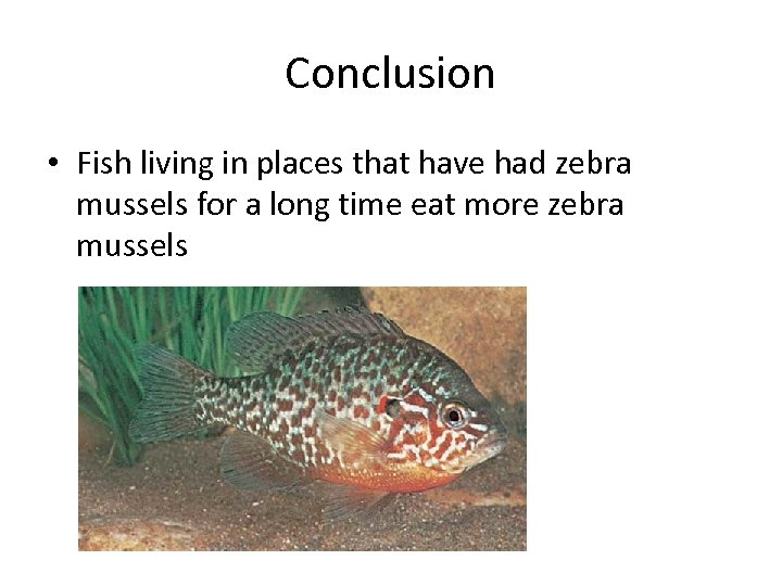 Conclusion • Fish living in places that have had zebra mussels for a long