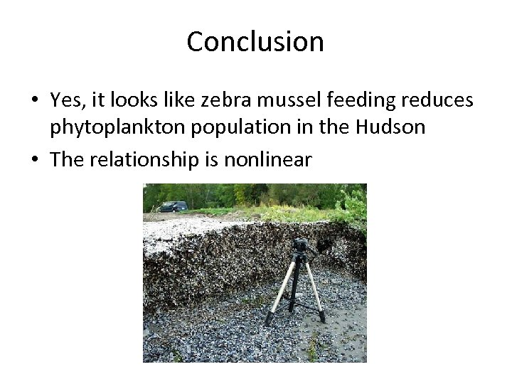 Conclusion • Yes, it looks like zebra mussel feeding reduces phytoplankton population in the