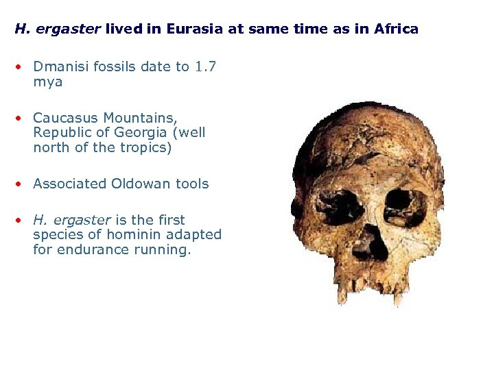 H. ergaster lived in Eurasia at same time as in Africa • Dmanisi fossils