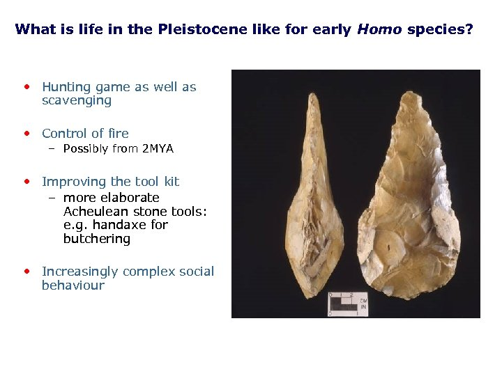 What is life in the Pleistocene like for early Homo species? • Hunting game