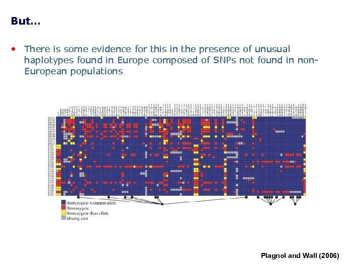 But… • There is some evidence for this in the presence of unusual haplotypes