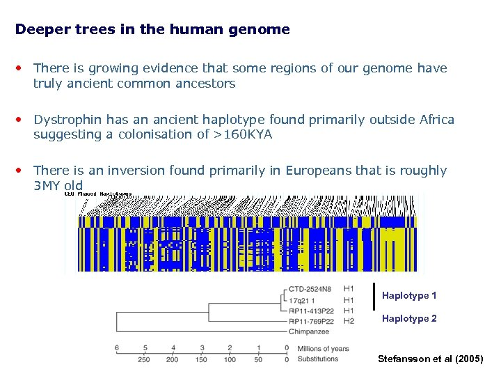 Deeper trees in the human genome • There is growing evidence that some regions