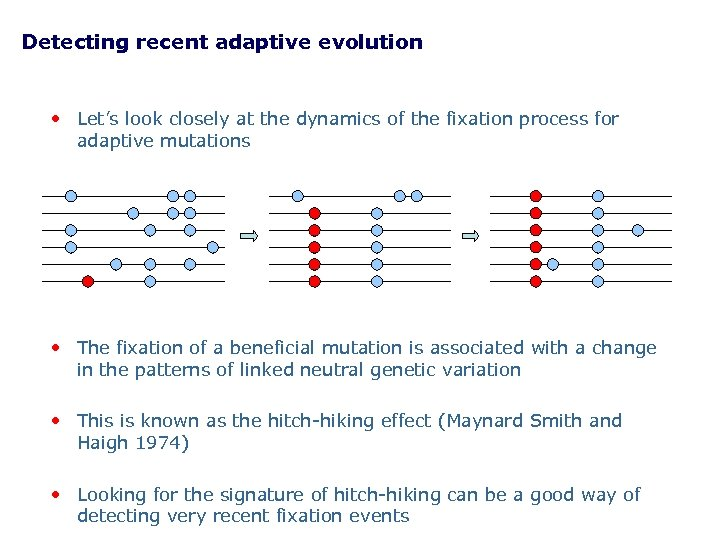 Detecting recent adaptive evolution • Let's look closely at the dynamics of the fixation