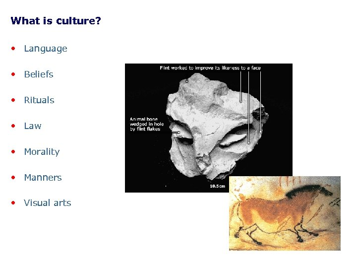 What is culture? • Language • Beliefs • Rituals • Law • Morality •