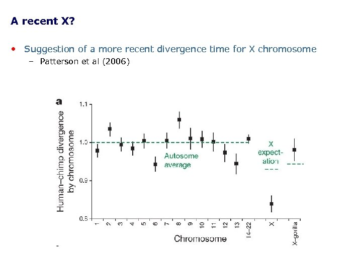 A recent X? • Suggestion of a more recent divergence time for X chromosome