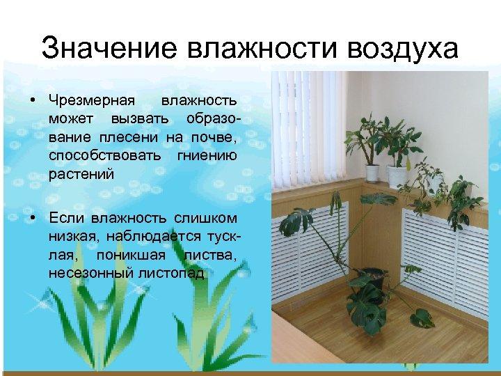 Значение влажности воздуха • Чрезмерная влажность может вызвать образование плесени на почве, способствовать гниению
