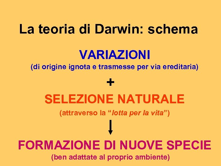 La teoria di Darwin: schema VARIAZIONI (di origine ignota e trasmesse per via ereditaria)