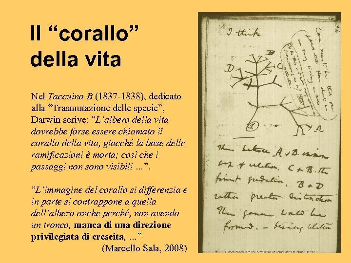 """Il """"corallo"""" della vita Nel Taccuino B (1837 -1838), dedicato alla """"Trasmutazione delle specie"""","""