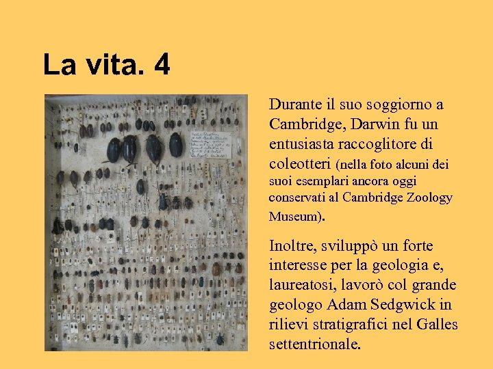 La vita. 4 Durante il suo soggiorno a Cambridge, Darwin fu un entusiasta raccoglitore