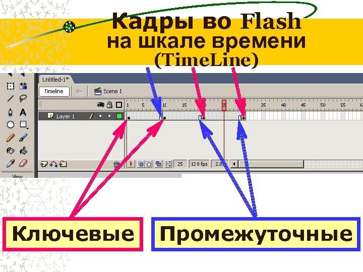 Кадры во Flash на шкале времени (Time. Line) Ключевые Промежуточные