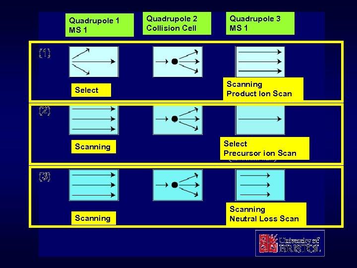 Quadrupole 1 MS 1 Select Scanning Quadrupole 2 Collision Cell Quadrupole 3 MS 1