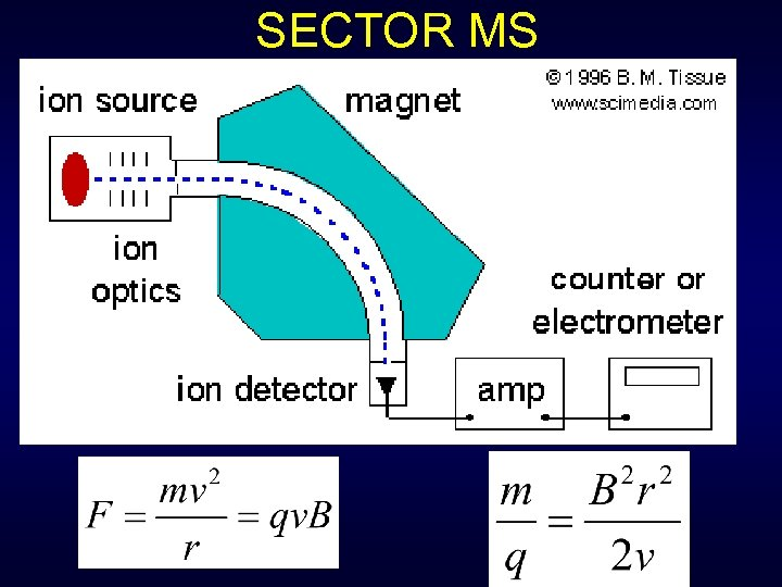 SECTOR MS