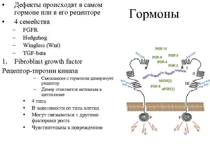 • • Дефекты происходят в самом гормоне или в его рецепторе 4 семейства