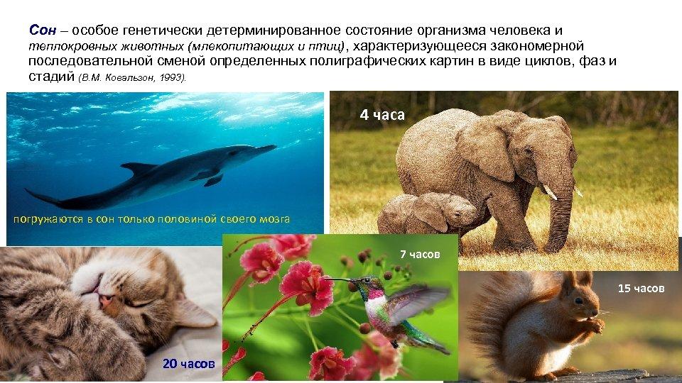 Сон – особое генетически детерминированное состояние организма человека и теплокровных животных (млекопитающих и птиц),