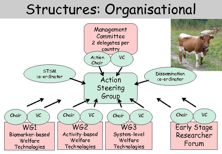 Structures: Organisational Management Committee 2 delegates per country Action Chair STSM co-ordinator Chair VC
