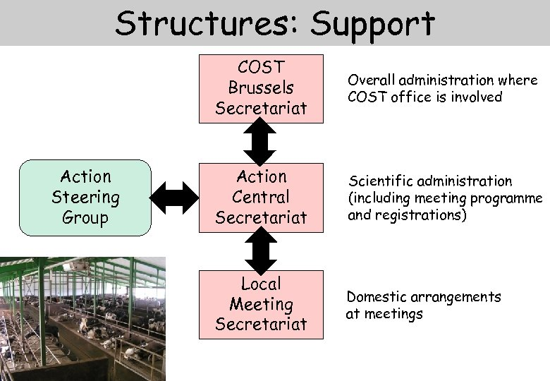 Structures: Support COST Brussels Secretariat Action Steering Group Overall administration where COST office is