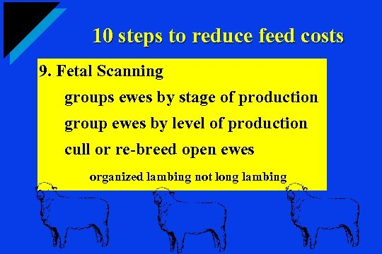 10 steps to reduce feed costs 9. Fetal Scanning groups ewes by stage of