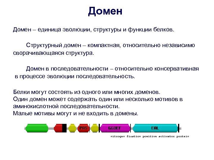 Домен – единица эволюции, структуры и функции белков. Структурный домен – компактная, относительно независимо