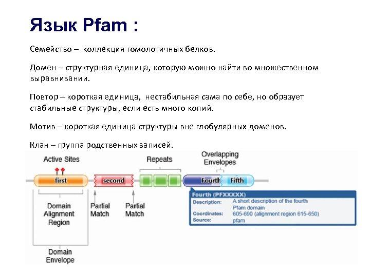 Язык Pfam : Семейство – коллекция гомологичных белков. Домен – структурная единица, которую можно