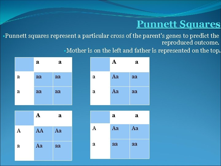 Punnett Squares • Punnett squares represent a particular cross of the parent's genes to