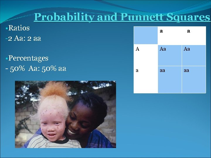Probability and Punnett Squares • Ratios -2 Aa: 2 aa aa A • Percentages