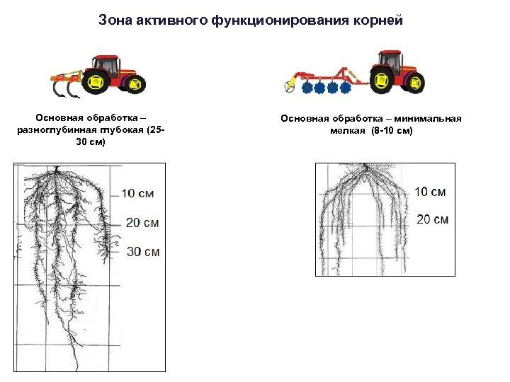 Зона активного функционирования корней Основная обработка – разноглубинная глубокая (2530 см) Основная обработка –