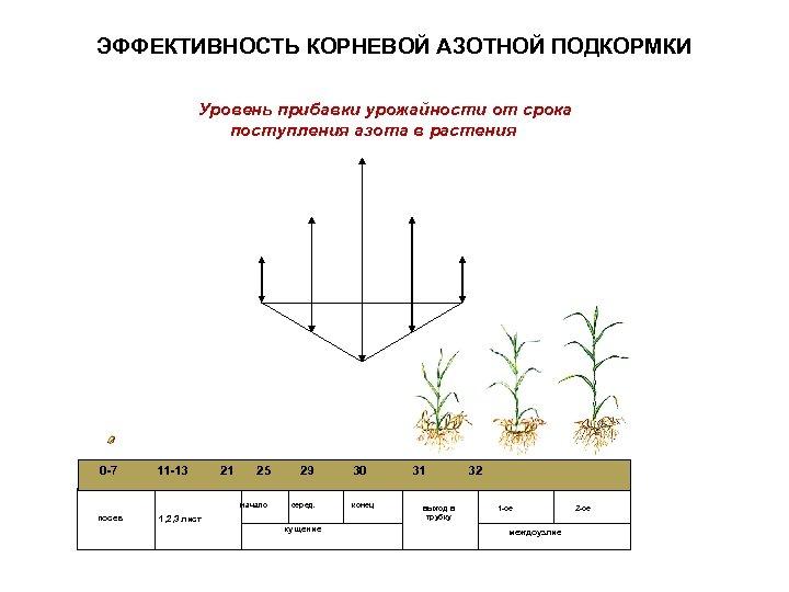 ЭФФЕКТИВНОСТЬ КОРНЕВОЙ АЗОТНОЙ ПОДКОРМКИ Уровень прибавки урожайности от срока поступления азота в растения 0