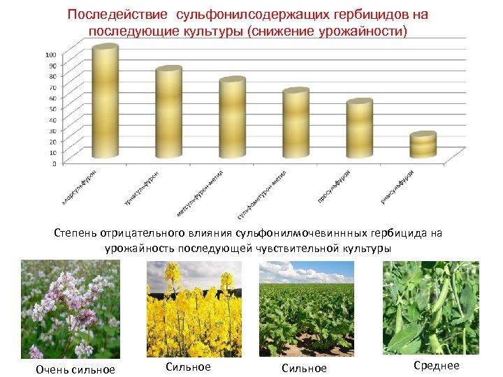 Последействие сульфонилсодержащих гербицидов на последующие культуры (снижение урожайности) Степень отрицательного влияния сульфонилмочевиннных гербицида на