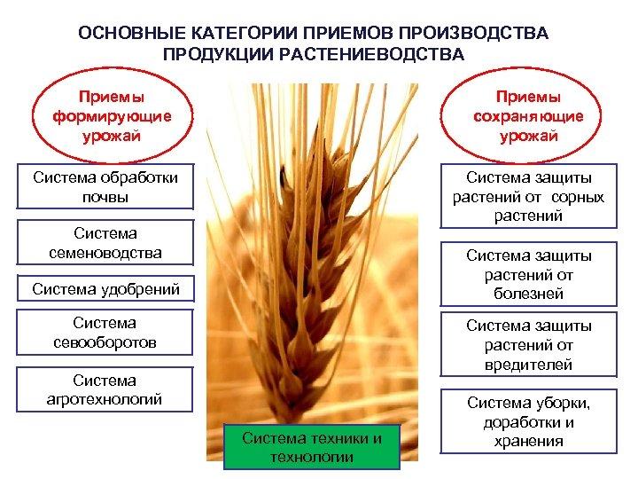 ОСНОВНЫЕ КАТЕГОРИИ ПРИЕМОВ ПРОИЗВОДСТВА ПРОДУКЦИИ РАСТЕНИЕВОДСТВА Приемы формирующие урожай Приемы сохраняющие урожай Система обработки