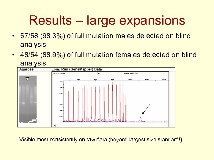 Results – large expansions • 57/58 (98. 3%) of full mutation males detected on