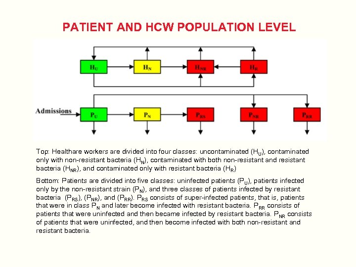 PATIENT AND HCW POPULATION LEVEL Top: Healthare workers are divided into four classes: uncontaminated