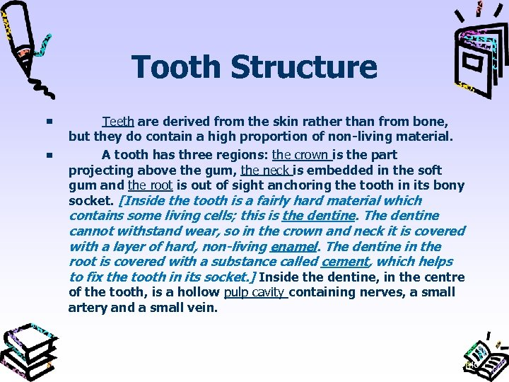 Tooth Structure Teeth are derived from the skin rather than from bone, but they