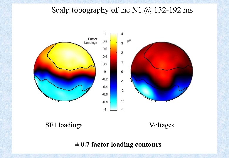 Scalp topography of the N 1 @ 132 -192 ms SF 1 loadings Voltages