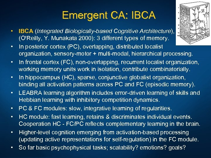 Emergent CA: IBCA • IBCA (Integrated Biologically-based Cognitive Architecture), (O'Reilly, Y. Munakata 2000): 3