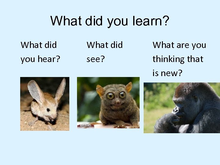 What did you learn? What did you hear? What did see? What are you