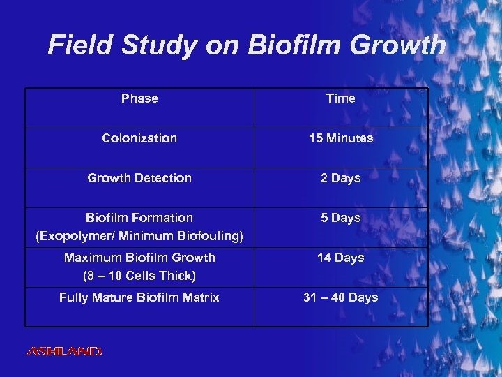 Field Study on Biofilm Growth Phase Time Colonization 15 Minutes Growth Detection 2 Days
