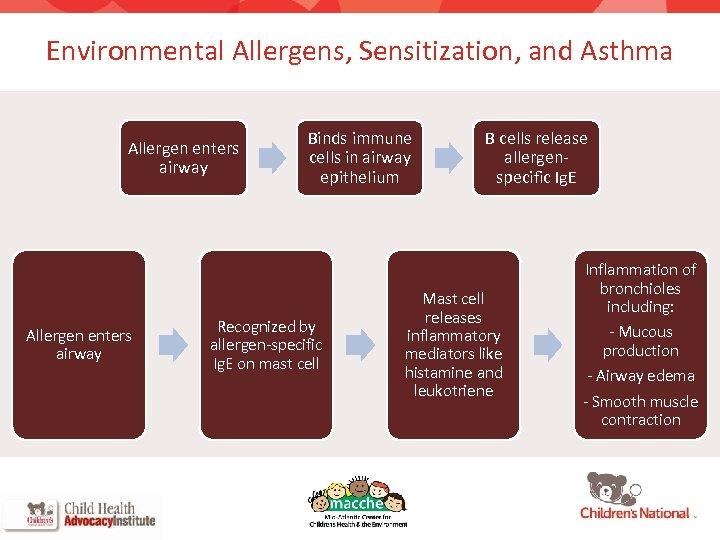 Environmental Allergens, Sensitization, and Asthma Allergen enters airway 6 Binds immune cells in airway