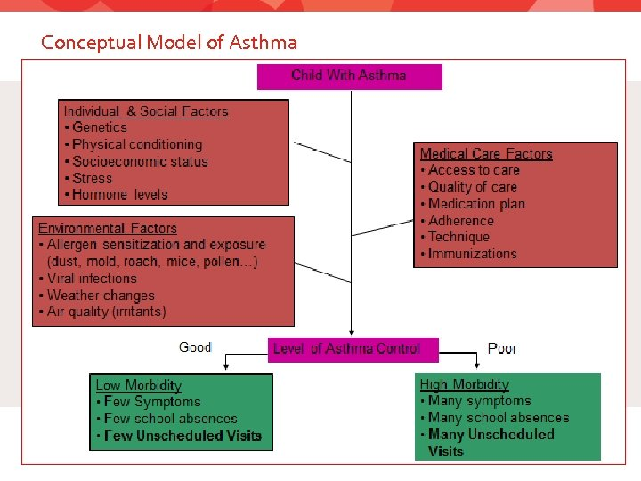 Conceptual Model of Asthma 7