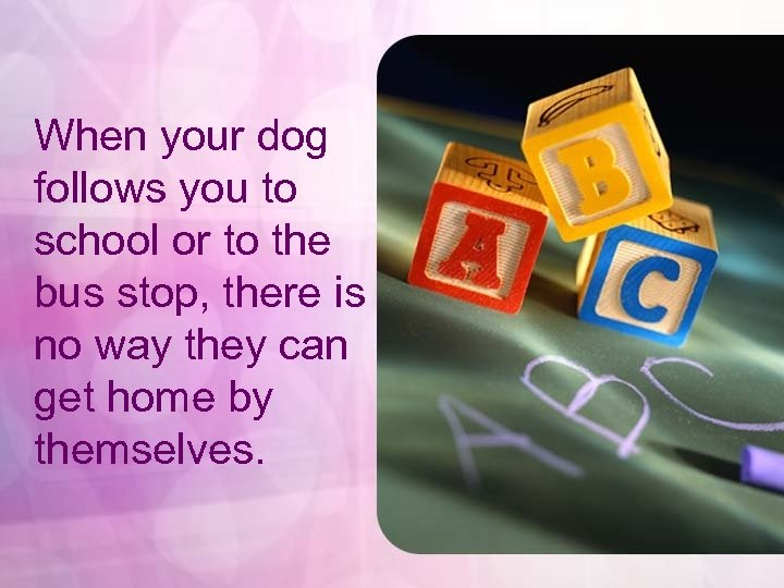 When your dog follows you to school or to the bus stop, there is