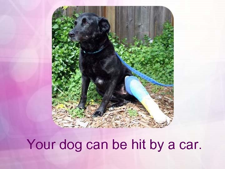 Your dog can be hit by a car.