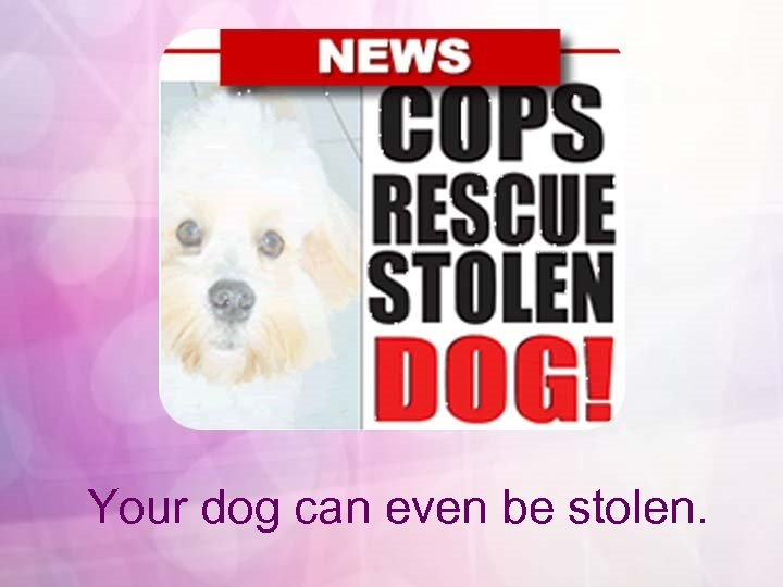 Your dog can even be stolen.